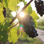 Kulinarische Weinprobe 2016